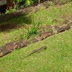 Un lagarto en el jardín