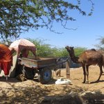 camel tour close by