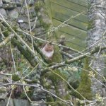 A red squirrel in the B&B garden