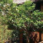 hill rock villa 29