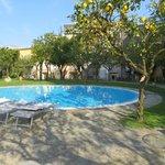 Pool surrounded by lemon/orange trees
