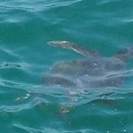 Friendly sea turtle!