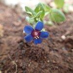 en lilli bitte blomst :) med et stort ego