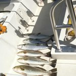 The fresh caught fish....