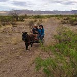 Driving Mini Horses