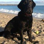 Kernow - our very friendly black labrador.