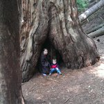 two kids and a redwood