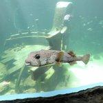 Mini acuario