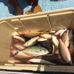 Our catch for the day