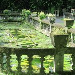 the evocative lily pond
