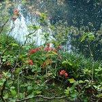 Nitobe Memorial Garden Foto