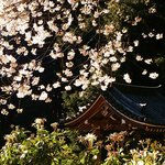 blossoms and roof