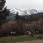 elk outside our back door