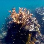 Magnifiques coraux mais pas beaucoup de poissons
