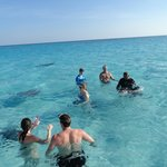 Swimming with the stingrays