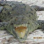 new croc area