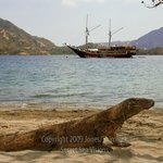 The Seven Seas Liveaboard at Komodo, Indonesia