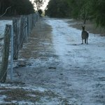 Just one of the walks where you'll encounter roos