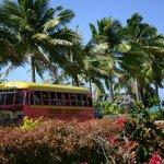 Der Samoa Bus