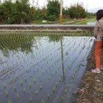 Nearby padi field