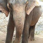 Слоненок Наташа, 15 лет