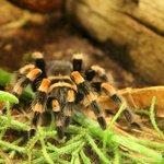 паучок в Лондонском зоо by Orange_bestiya