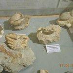 Fossili di granchi