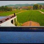 Vue sur les rizières et la villas au fond, depuis l'espace restaurant-piscine