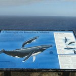 whale watching spot