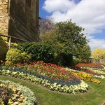 Tulip beds with the castle ruins behind