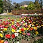 Villa Taranto settimana dei tulipani