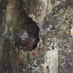 Bird in dead tree-Corcovado