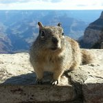 Grand Canyon National Park, Squirrel.