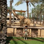 my daughter next to a giraffe!