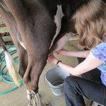 Milking a cow on their small farm
