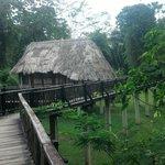 Cabana #10 birdwalk cabana