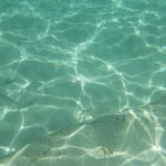 Spiaggia Anse Royale