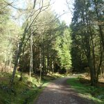 Forest walk up to Conic Hill