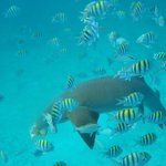 Snorkeling Action