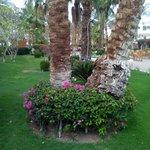 Пальмы и цветы