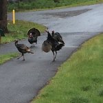 Where the deer and the wild turkey roam (on the grounds)