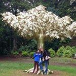 The beautiful Golden tree sculpture....