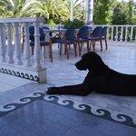 входная зона и хозяйская собака :)