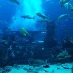 Аквариум с акулами