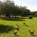 Los jardines y gallinas de Mas Rabiol