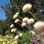 Alien plant life at the Yampa RIver Botanic Park