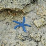 starfish, during low tide