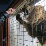 Meet the Lions - feeding Lucifer