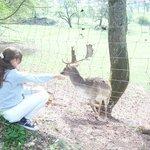 """los """"Bambi"""" de la vuelta"""