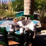 Cat lounging near pool
